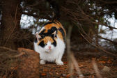 Wild cat in the woods — Stockfoto