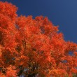 Stock Photo: Fall colors