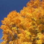 Fall tree colors — Stock Photo