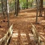 Bridge through autumn woods2 — Stock Photo