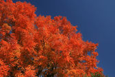 Fall colors — Stockfoto