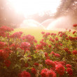 Enchanted scene with roses — Stock Photo