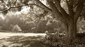 Sepia-toned park scene — Stock Photo