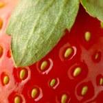 Strawberry closeup — Stock Photo #6376976