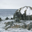 Stock Photo: Rocky island in Southern Ocean.