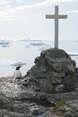 Gentoo penguins nest in a lonely grave. — Zdjęcie stockowe