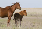 Mare and foal in the spring steppe. — Stock Photo