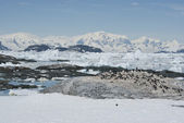 Adelie penguin colony on a deserted island Antarctic. — Foto de Stock