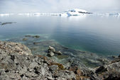 Strip tide when the tide Antarctic summer. — Стоковое фото