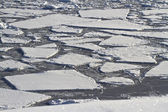 Splintered ice field in Antarctic waters — Stock Photo