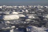 Strait Pinola near the Antarctic Peninsula full of ice and small — Stock Photo