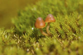 Brown mushrooms growing among moss in the Antarctic Peninsula — Stock Photo