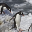 Gentoo penguins are  jump from big ice floe to ice snow — Stock Photo #50100079