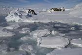Coastal strip of small icebergs and ice islands frozen Antarctic — Stok fotoğraf