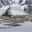 Several colonies of Adelie penguins on the Antarctic island on a — Foto Stock #50452035