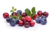 Blueberry and cowberry with green leaflets — Foto Stock