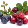 Blueberry and cowberry with green leaflets — Stock Photo