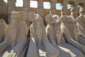 Sphinxes at Karnak temple in Luxor — Stock Photo