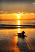 A working type english springer spaniel at sunset — Stock Photo