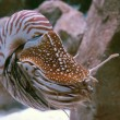 Nautilus - Stock Photo