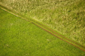Green meadow diagonal tractor track — Stock Photo