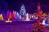 Christmas fantasy - park & forest in xmas lights — Stock Photo