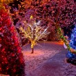 Colorful Christmas lights on trees — Stock Photo