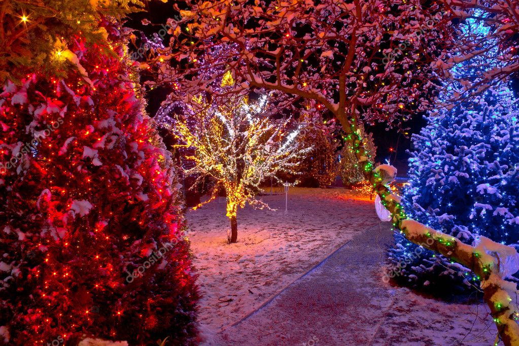 Colorful christmas lights on trees stock photo 169 xbrchx 15612537
