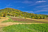 Beautiful green hill with vineyard cottages — Stock Photo