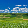 Beautiful green agricultural landscape in Croatia — Stock Photo