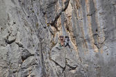 Rock climbing in Paklenica national park — Stock Photo