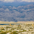 Stock Photo: Stone desert under Velebit mountain