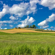 Green nature sceenery under blue sky — Stock Photo