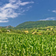 Green agriculture fields panoramic view — Stock Photo