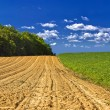 Agricultural landscape - young corn field — Stock Photo