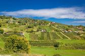 Idyllic green hill vineyards area — Stock Photo