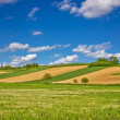 Green agricultural landscape under blue sky — Stock Photo