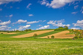 Green agricultural landscape under blue sky — Foto Stock