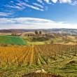Bilogora vineyard landscape in Croatia — Stock Photo