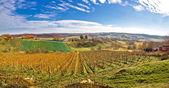 Bilogora vineyard landscape in Croatia — ストック写真