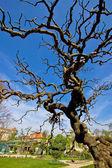 Tree in Botanical garden in Zagreb — Stock Photo