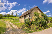 Vineyards and mud made cottage — Foto Stock