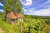 Błoto chałupa w wzgórze winnica — Zdjęcie stockowe