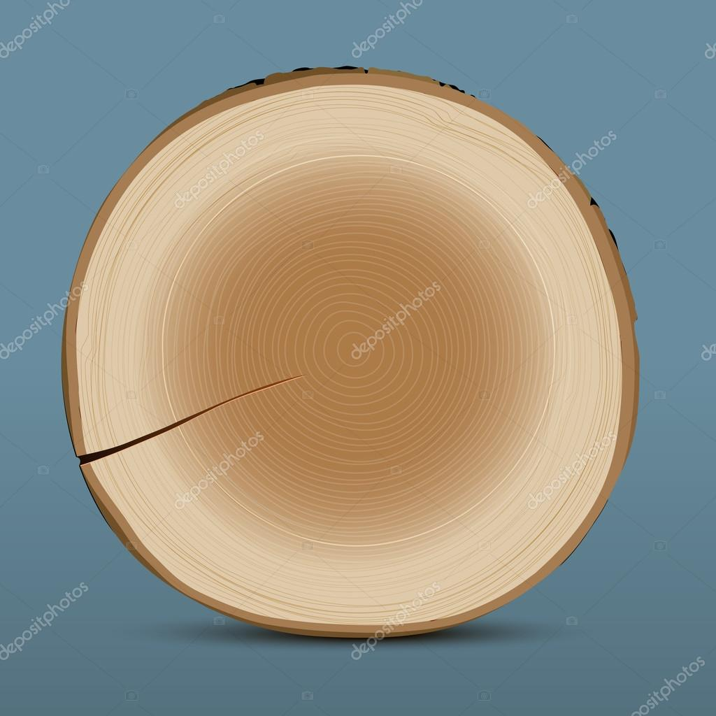 Coupe transversale de tronc d 39 arbre image vectorielle a r t u r 12791061 - Tronc d arbre coupe ...