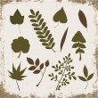 Leaf collection on a vintage grunge background — Stock Vector