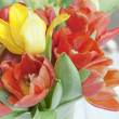 Group of white and red tulip flowers in the garden — Stock Photo
