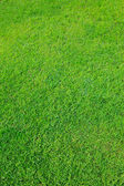 Green grass field use as nature background — Stock Photo