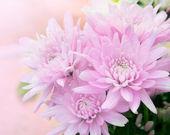 美しいピンクの花 — ストック写真