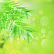 Stock Photo: Abstract ofgreen nature background
