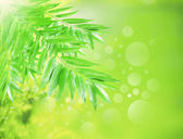 Abstract ofgreen nature background — Stock Photo